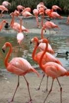 Estate Planning Flamingo