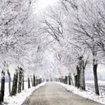Heating Bill - The Winter Blues