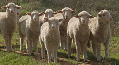 Sequestration - We The Sheeple