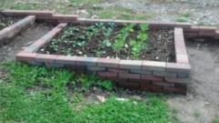 garden1 musings