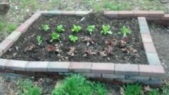 garden 2 musings