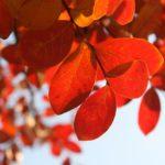 4 Financial Steps to Take This Fall
